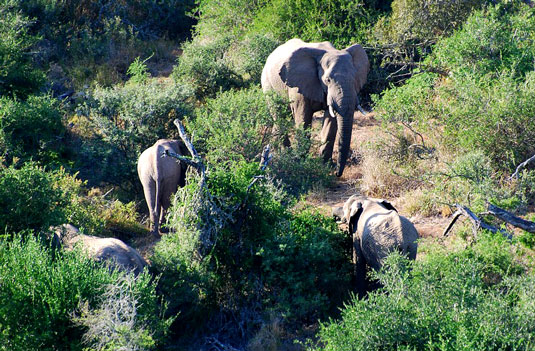 Addo Elephant National Park Eastern Cape South Africa