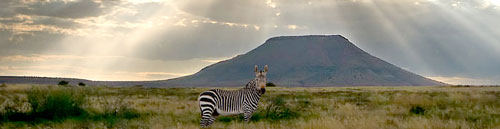 Mountain Zebra National Park  Eastern Cape South Africa